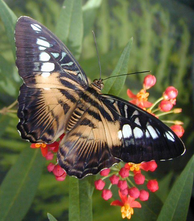 sylvia lewis beauty